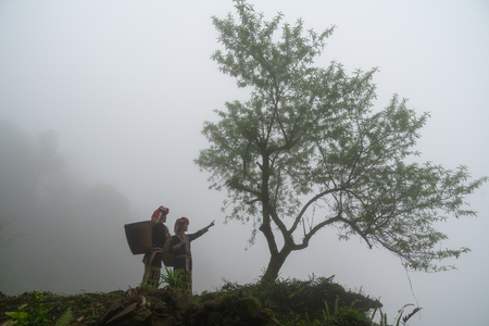 Vietnamese ethnic minority Red Dao women in traditional dress and basket on back with a tree in misty forest in Lao Cai, Vietnam 版權商用圖片