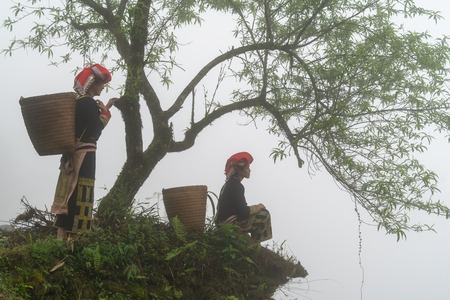 Vietnamese ethnic minority Red Dao women in traditional dress and basket on back with a tree in misty forest in Lao Cai, Vietnam Фото со стока