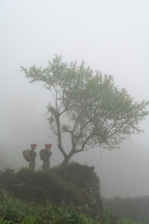 Vietnamese ethnic minority Red Dao women in traditional dress and basket on back with a tree in misty forest in Lao Cai, Vietnam 写真素材