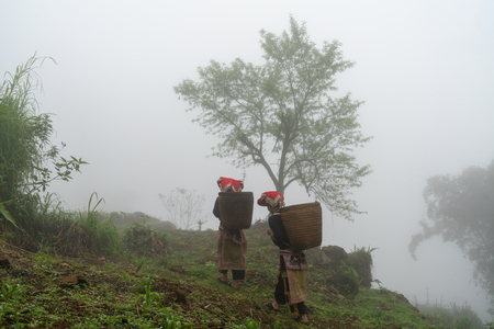 Vietnamese ethnic minority Red Dao women in traditional dress and basket on back with a tree in misty forest in Lao Cai, Vietnam Imagens