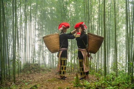 Vietnamese ethnic minority Red Dao women in traditional dress and basket on back in misty bamboo forest in Lao Cai, Vietnam Фото со стока