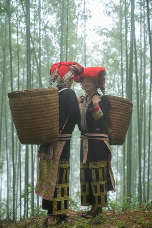 Vietnamese ethnic minority Red Dao women in traditional dress and basket on back in misty bamboo forest in Lao Cai, Vietnam
