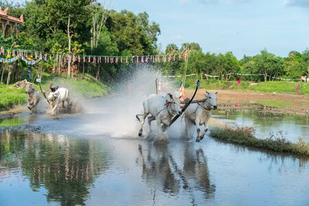 Ox racing festival in Chau Doc, Vietnam