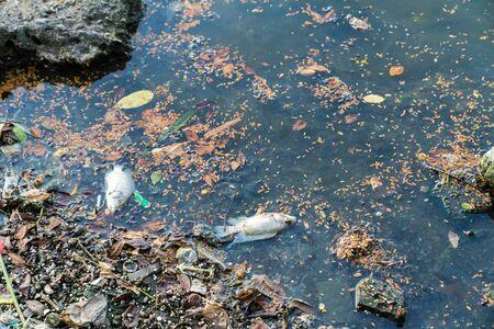 Dead fish on the river. Dark water pollution Stock fotó