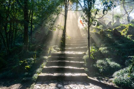 Wet path in the forest with mist and sunbeams Stock Photo