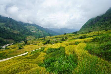 Terraced rice field landscape in harvesting season in Y Ty, Bat Xat district, Lao Cai, north Vietnam Reklamní fotografie