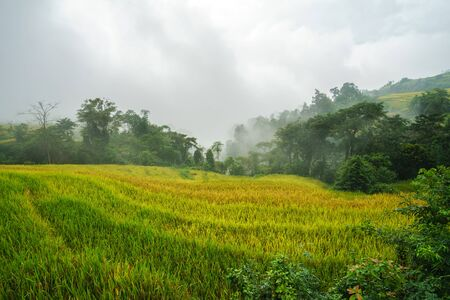 Terraced rice field landscape in harvesting season with low clouds in Y Ty, Bat Xat district, Lao Cai, north Vietnam Reklamní fotografie