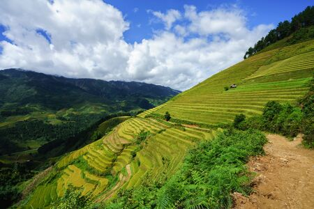 Terraced rice field in harvest season in Mu Cang Chai, Vietnam. Stock Photo