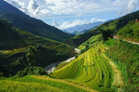 Terraced rice field in harvest season in Mu Cang Chai, Vietnam.