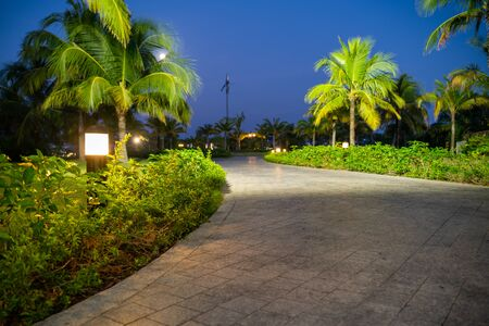Road in resort park at night with palm trees on background. Soft focus Imagens