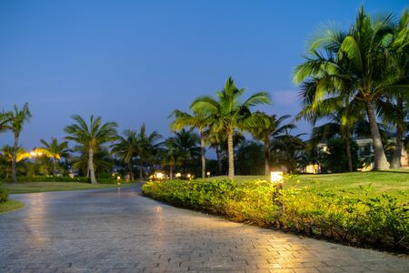 Illuminated light in resort park at night with palm trees on background