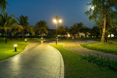 Road in resort park at night with palm trees on background