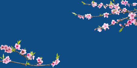 Pink plum blossom on blue background. Lunar new year card, poster, banner