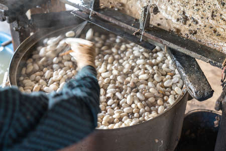Silkworm cocoon is boilling and unwinding by Vietnamese worman to make silk thread at village in Nam Dinh province, Vietnam 版權商用圖片