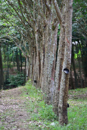 southern of thailand: Plantations in southern Thailand  Stock Photo