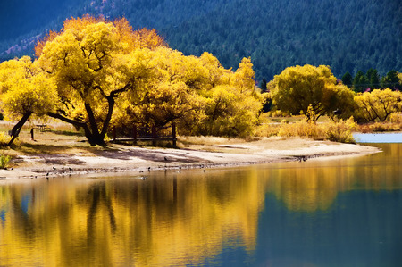 Autumn Foliage reflections in Palmer Lake, CO