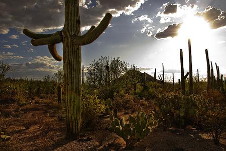 Desert Sunset with cactus