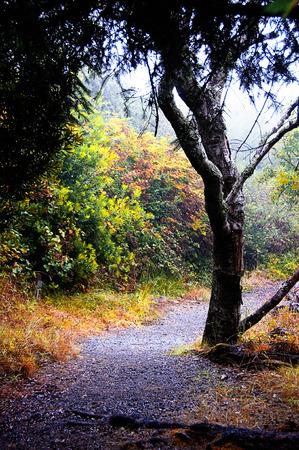 pathway along the Oregon coast