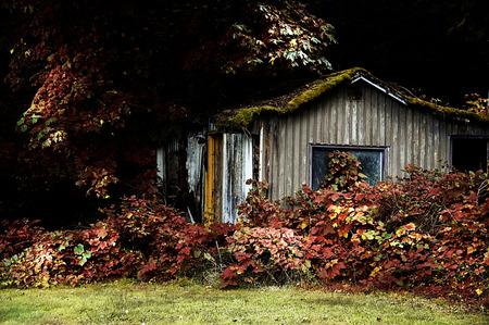 old, abandoned shack along a road in Oregon