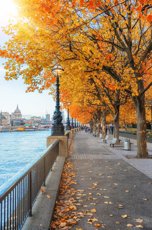 London in fall time: orange colored trees at the Southbank on a sunny day, United Kingdom Banco de Imagens - 95279695