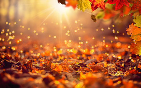 Colorful autumn background in the woods with red leafs and golden sunshine Фото со стока