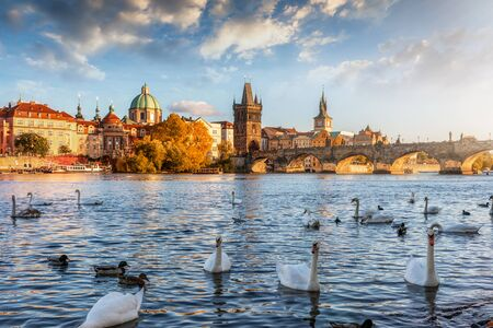 View over the Vltava river with swans swimming on the water to the Charles Bridge and old townscape of Prague, Czech Republic, during a golden autumn sunset Stock Photo