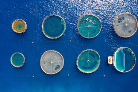 Aerial top down view of a fish farm in the blue, Mediterranean sea in Greece