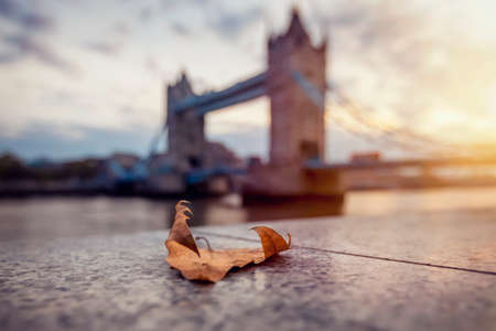 Autumn concept of London, United Kingdom, in autumn time with a defocused view to the Tower Bridge during sunrise time and a golden tree leaf in front 스톡 콘텐츠