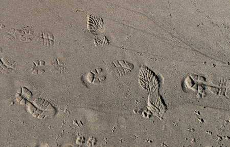 Tracks in the sand from shoes, birds and dogs photo
