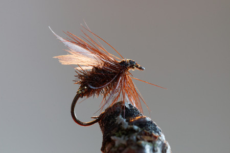 flyfishing: Macro shot of a home made dry fly fishing bait used for trout fishing