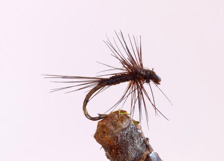 lure fishing: Macro shot di un nero piccola mosca secca richiamo da pesca utilizzati per la pesca alla trota