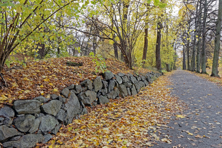 corylus: Stone wall and hazel trees   (lat. Corylus) in the park in autumn