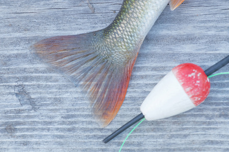 fishing bobber: Tail of a european perch and a red float laying on a gray bridge. Short depth of focus Stock Photo