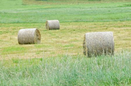 hayroll: Three hay rolls on a field