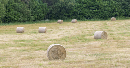 hayroll: Seven hay rolls on a field and trees in the background