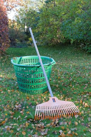 estado del tiempo: Rastrillo y hoja verde cesta en un c�sped lleno de hojas