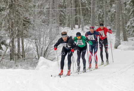 cross country: STOCKHOLM - JAN 24, 2016: Fighting group of cross country skiing men in the beautiful spruce forest at the Stockholm Ski Marathon event January 24, 2016 in Stockholm, Sweden Editorial