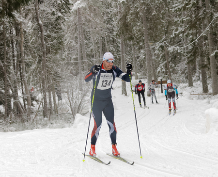 cross country: STOCKHOLM - JAN 24, 2016: Focused cross country skiing men in the beautiful spruce forest at the Stockholm Ski Marathon event January 24, 2016 in Stockholm, Sweden