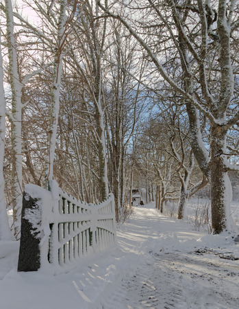 snowscape: Open gate and a snowy alley of trees a winter day Stock Photo