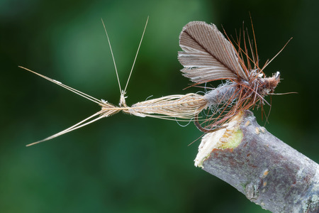 flyfishing: Macro shot of caddis fly dry fly fishing fly, brown body, wings and amtennas, leafs in background out of focus