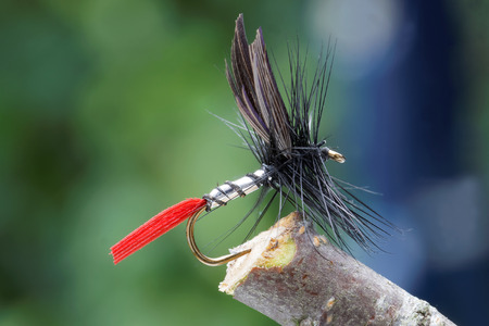 flyfishing: Macro shot of a dry fly fishing fly, silver body, black wings, red tail and leafs in background out of focus