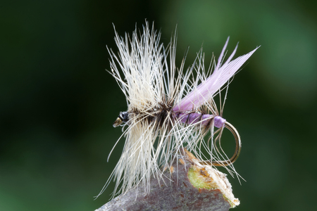 flyfishing: Macro shot of a dry fly fishing fly, purple body, white hackle and leafs in background out of focus Stock Photo