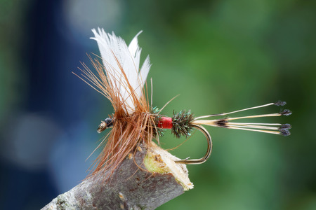 brown trout: Macro shot of a Red, brown and white dry fly fishing fly used for trout fishing