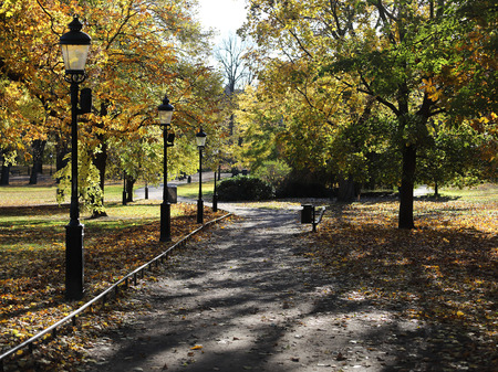 Park way, lampposts and lime trees during autumn