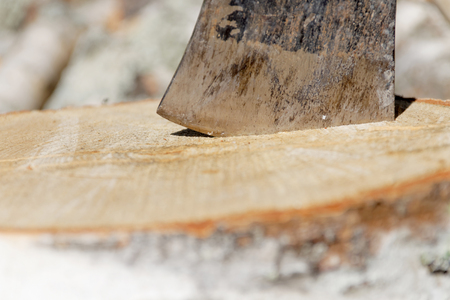 Closeup of axe in a birch log, a pile a logs in the background