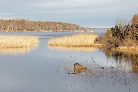 sweden winter: Archipelago and reed reflecting in the water in the warm morning light
