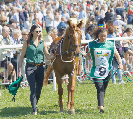 hippodrome: STOCKHOLM, SWEDEN - JUNE 06, 2017: Two young woman leading a gallop arabian race horse, audience in the background at Nationaldags Galoppen at Gardet. June 6, 2017 in Stockholm, Sweden