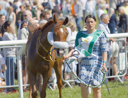 hippodrome: STOCKHOLM, SWEDEN - JUNE 06, 2017: Beautiful woman leading a gallop arabian race horse, audience in the background at Nationaldags Galoppen at Gardet. June 6, 2017 in Stockholm, Sweden
