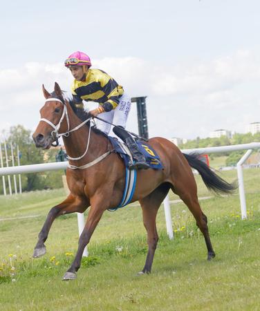 hippodrome: STOCKHOLM, SWEDEN - JUNE 06, 2017: Front side view of a jockey riding a brown arabian race horse at Nationaldags Galoppen at Gardet. June 6, 2017 in Stockholm, Sweden