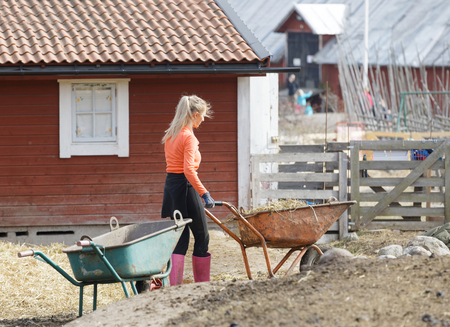 STOCKHOLM, SWEDEN - APR 02, 2017: Female farmer with a wheelbarrow in the pasture where the lamb lives in the farm Overjarva Gard outside Stockholm in Sweden Editorial